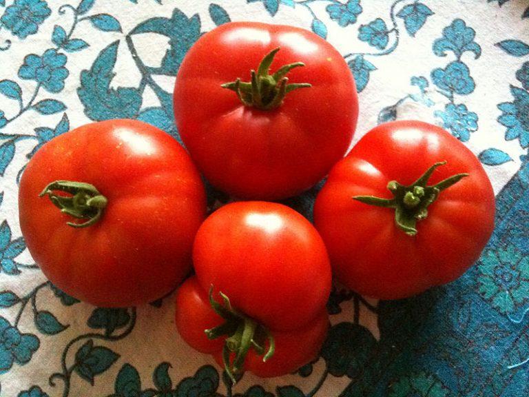 Déguster les tomates du Marmande