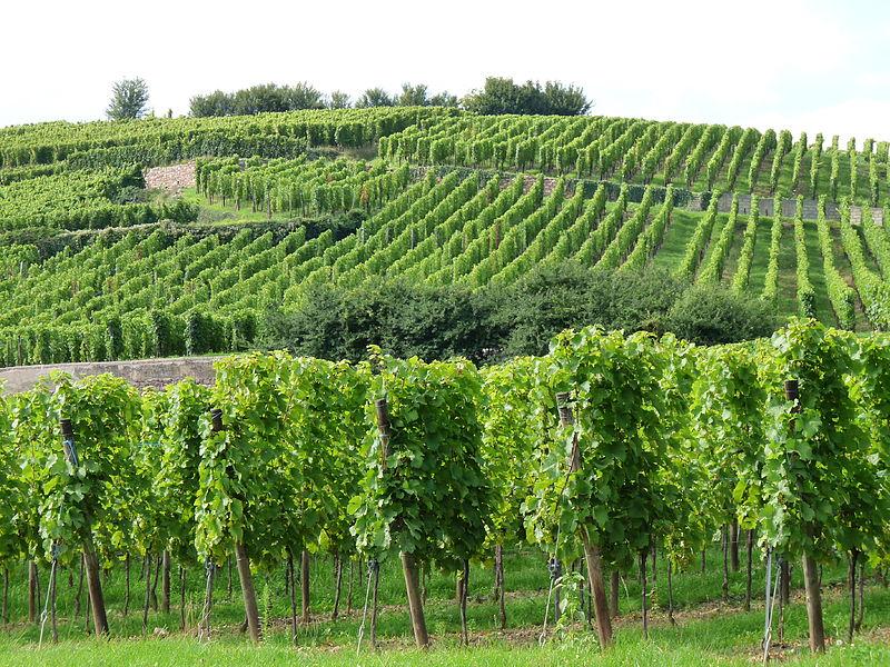Top 3 des meilleurs vignobles du Lot et Garonne